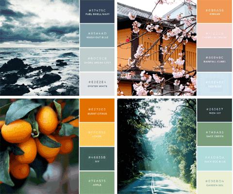 color palette image